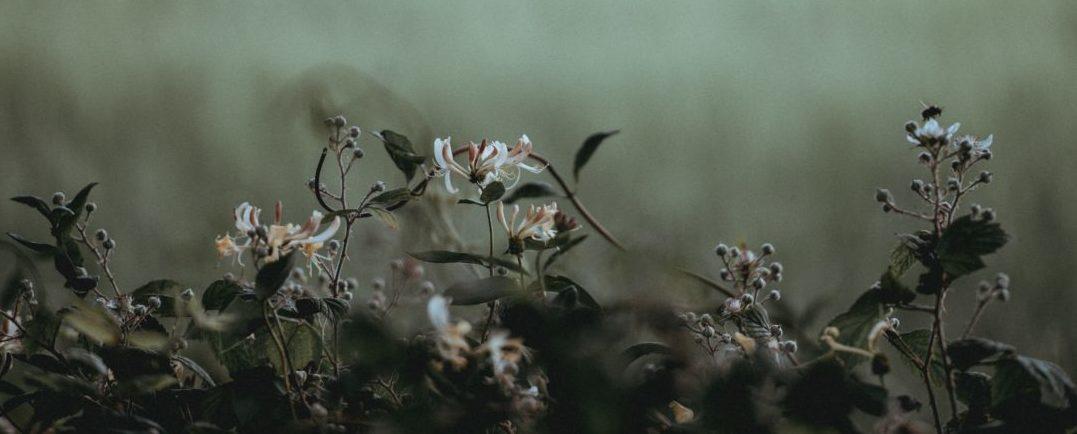 Thann - photo fleurs pour symboliser cimetière