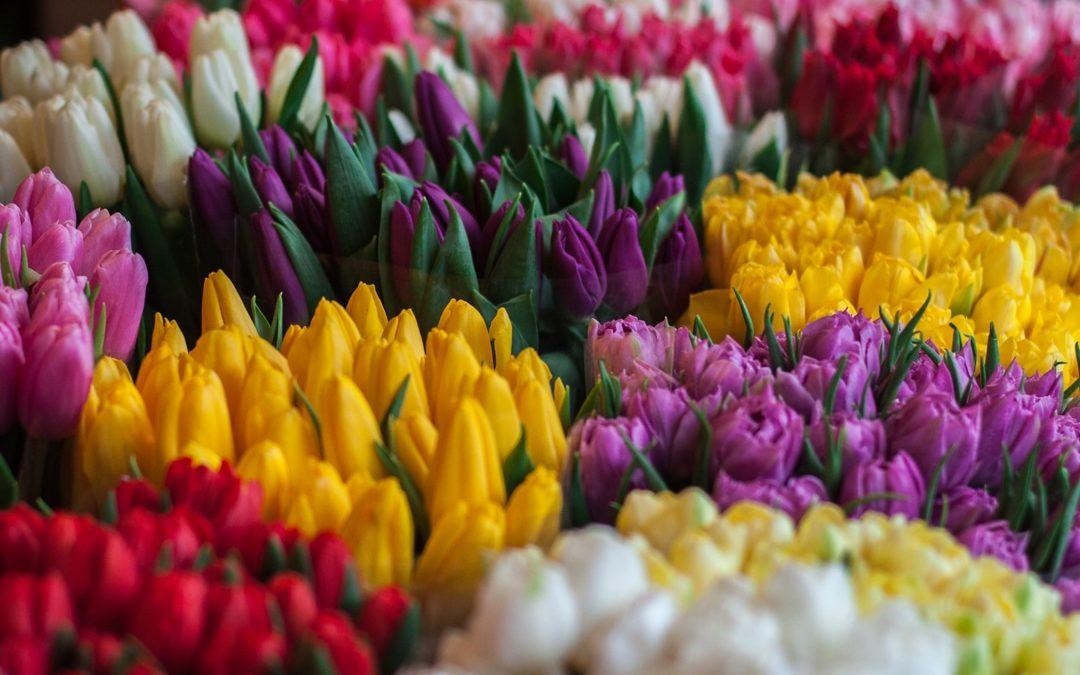 Opération tulipes 2020